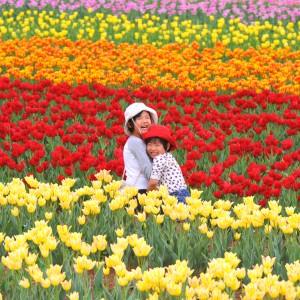 チューリップ(世羅高原農場)_2013tyuripu (6)
