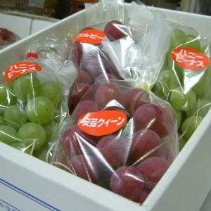 梨、ぶどう(世羅大豊農園)_grape01