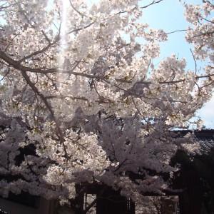 今高野山 (紅葉・桜)_imakouyasan2