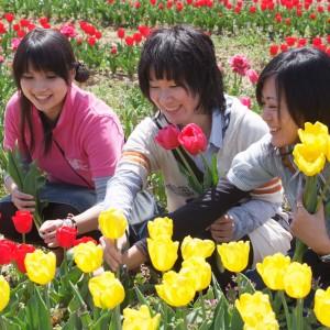 チューリップ(世羅高原農場)_tulip17