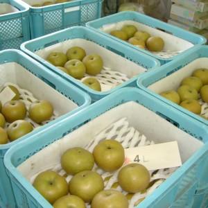 梨、ぶどう(世羅大豊農園)_pear03