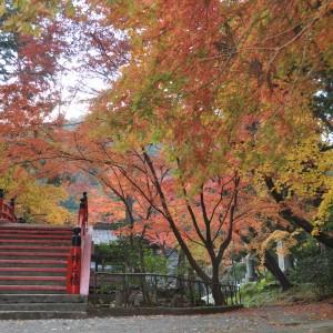 今高野山 (紅葉・桜)_2013kouyou