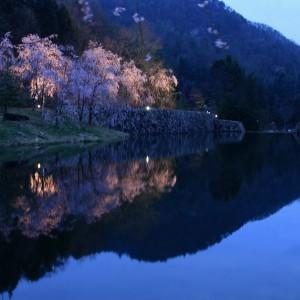 しだれ桜(世羅甲山ふれあいの里)_2013shidarezakura (4)