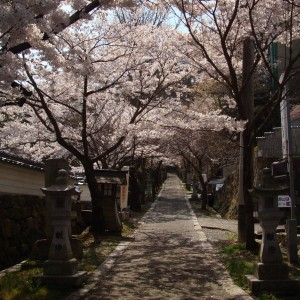 今高野山 (紅葉・桜)_imakouyasan3