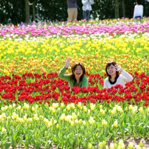 チューリップ(世羅高原農場)_tulip03