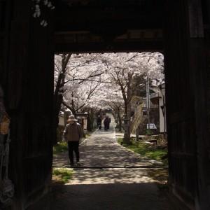 今高野山 (紅葉・桜)_imakouyasan1