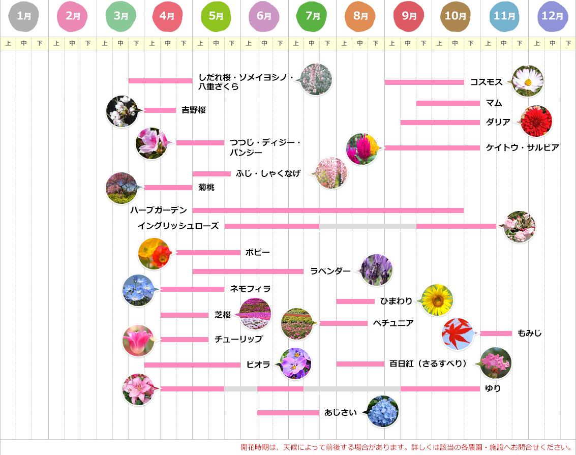 年間お花カレンダー